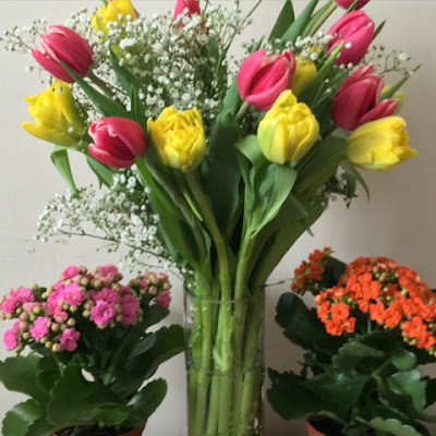 Tulips and Gypsophila plants