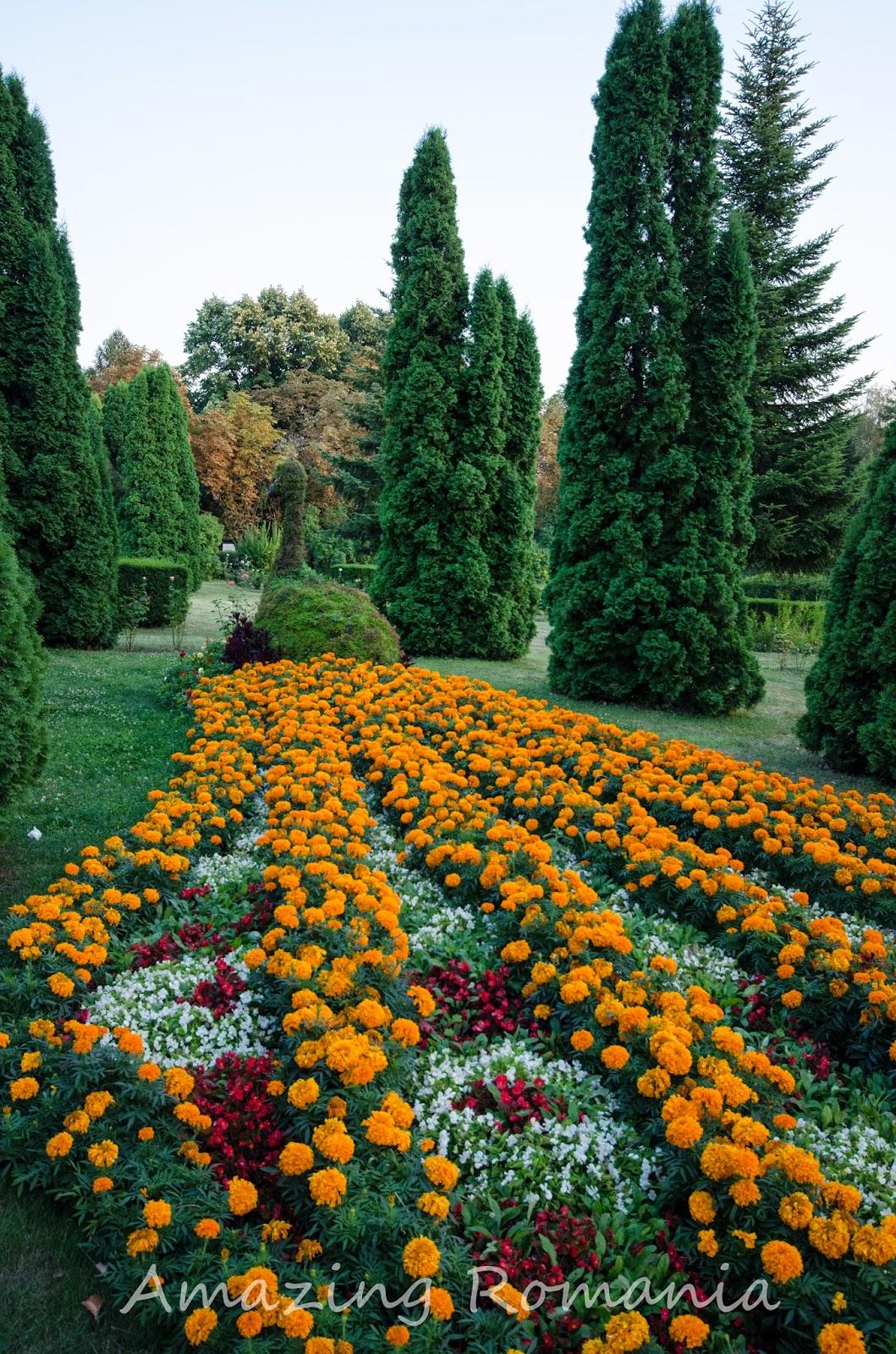 aranjament floral sub formă de păun