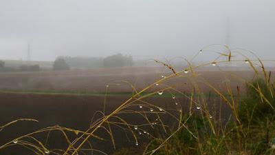 niebla arahal