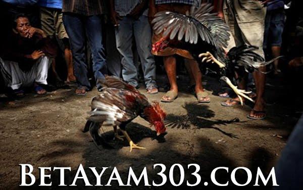 Penjelasan Tentang Permainan Judi Sabung Ayam S128