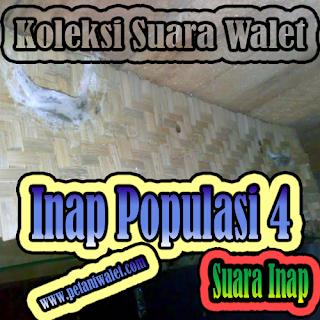 Suara Walet Inap Populasi 4 By. Arief Budiman