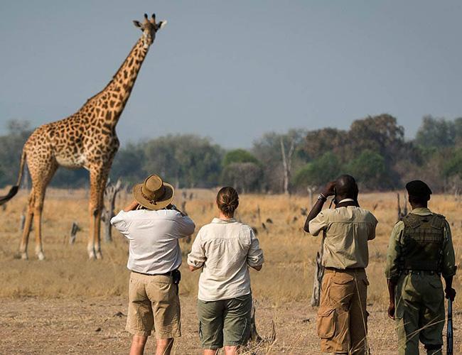 Xvlor South Luangwa National Park
