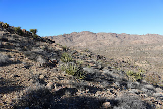 View north toward Queen Mountain from the east flank of Negro Hill, Joshua Tree National Park