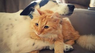 Hayatımızın En İyi Dostları Köpekler