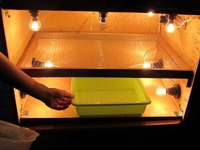Djabrikz_08 Membuat Penetasan Telur