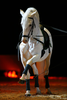 Cavallo Lipica