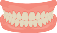 Gum (gusi)