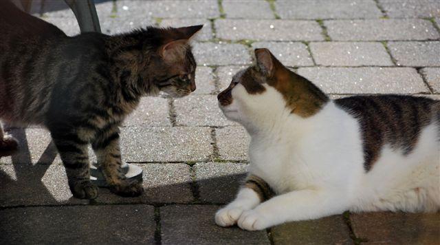 Partnervermittlung umsonst