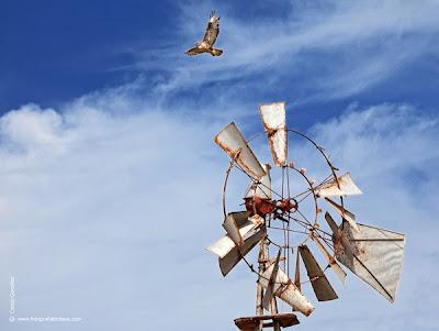LA FOTO DEL DIA: fly on fuerteventura 1