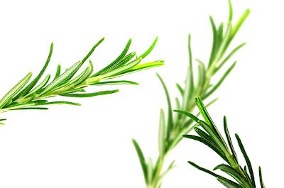Herbal, Herbal Plant, tarragon, tarragon plant benefits, tarragon herbs, tarragon benefits, tarragon uses, tarragon nutrition,