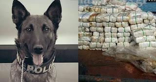 Σκύλος του λιμενικού βγήκε βόλτα στα Χανιά και εντόπισε 70 εκατ. ευρώ ναρκωτικά