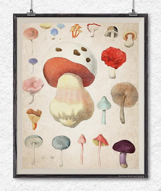 Mushroom botanical illustration mushroom vintage clipart - Etsy