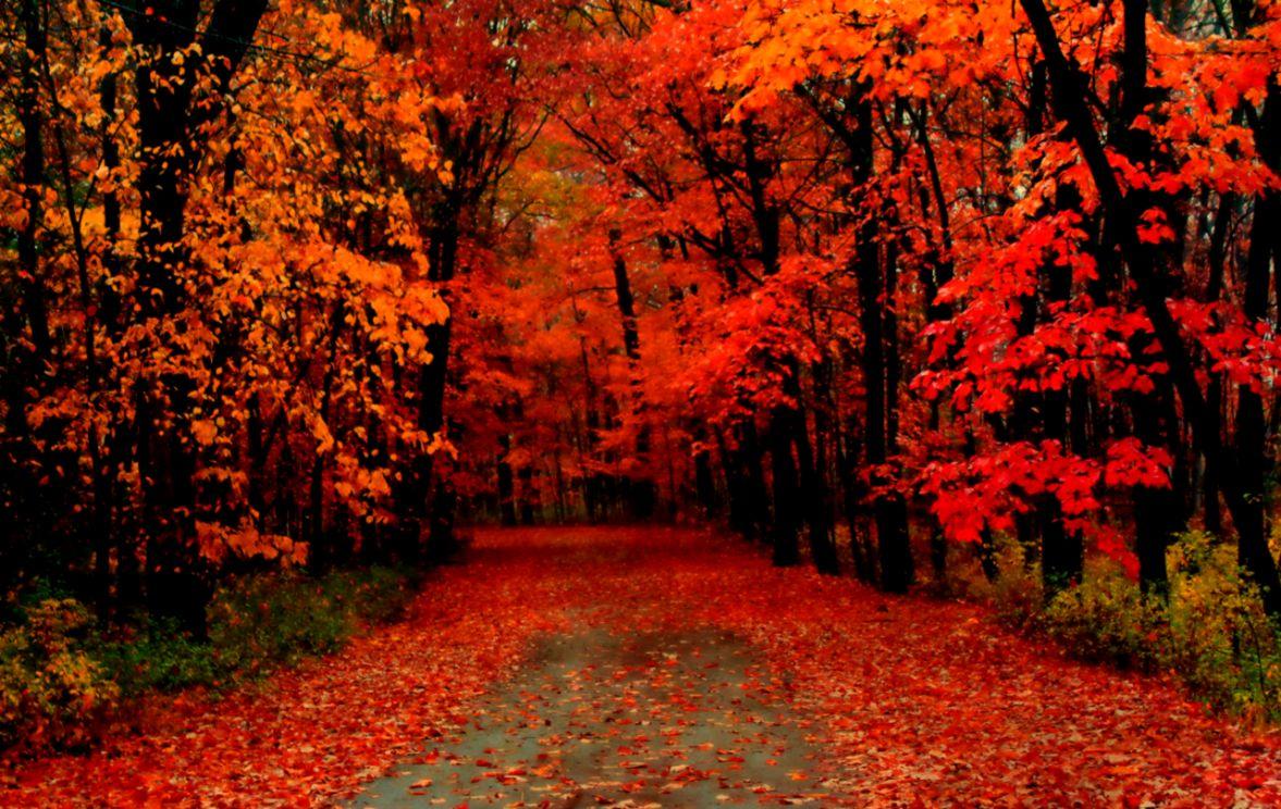 Autumn Trees Wallpaper Widescreen 3 The Pad Studiosthe