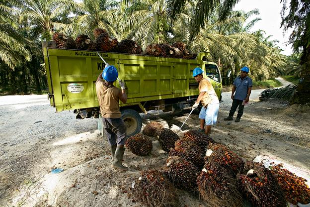 Kontribusi Grup yang Pernah Bernama Raja Garuda Mas Terhadap Ekonomi Indonesia
