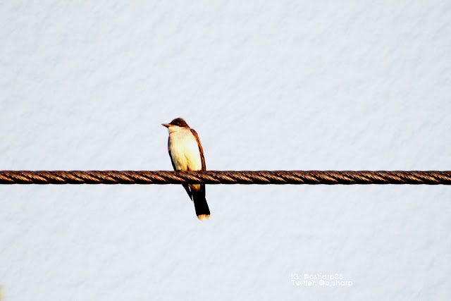 CSM IMAGE - Bird On A Rope