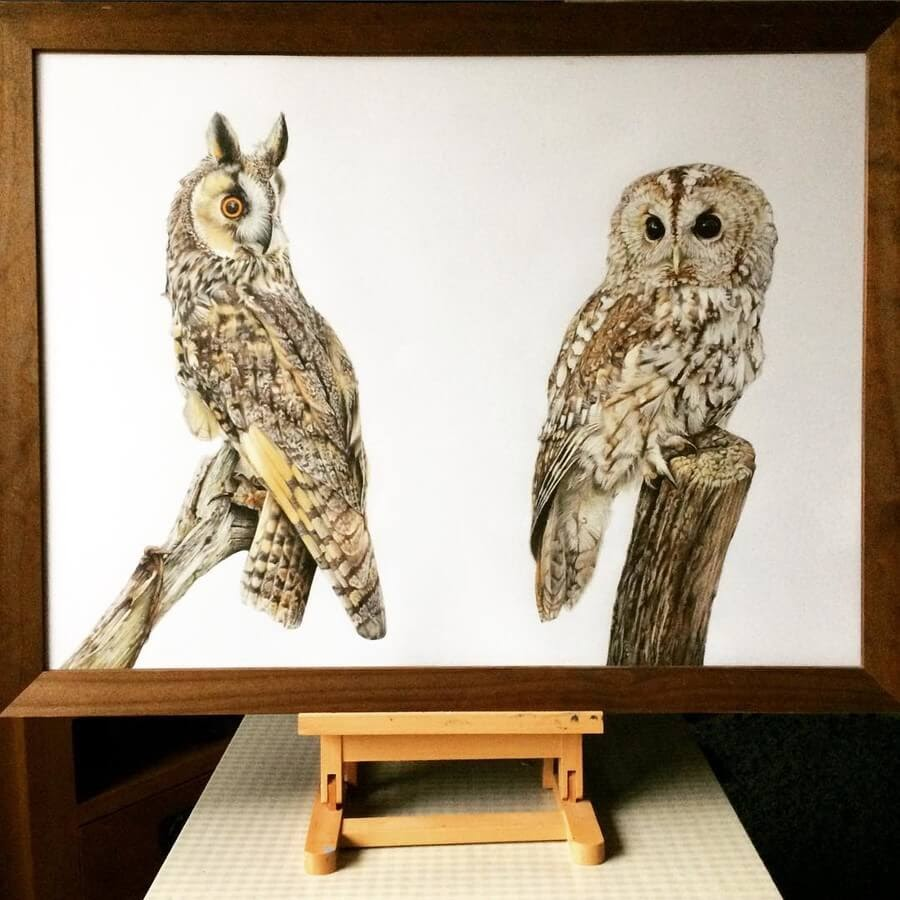 06-Owls-Tom-Strutton-Animal-Drawings-www-designstack-co