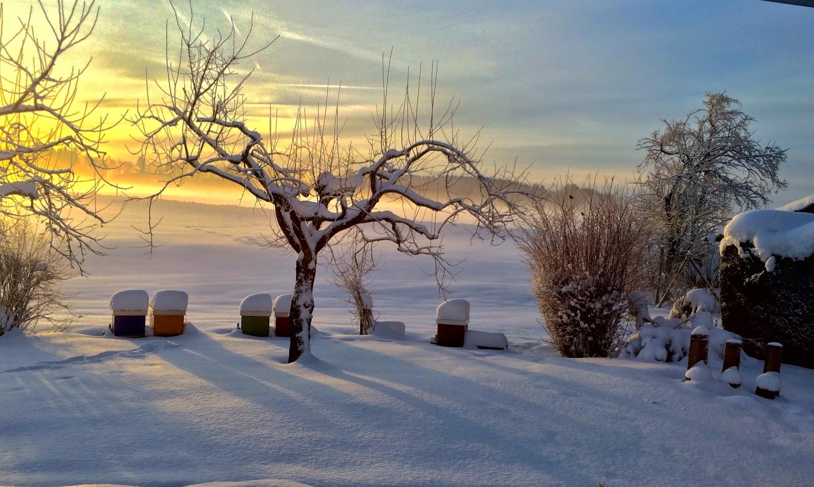 ein hobby in dadant winterzeit ruhezeit