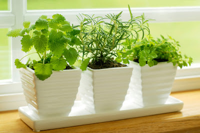 8 Plantas de Interior sin Mantenimiento