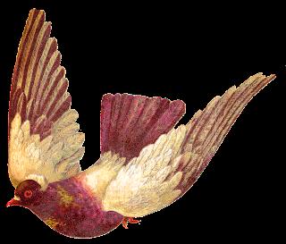 bird pigeon download animal image