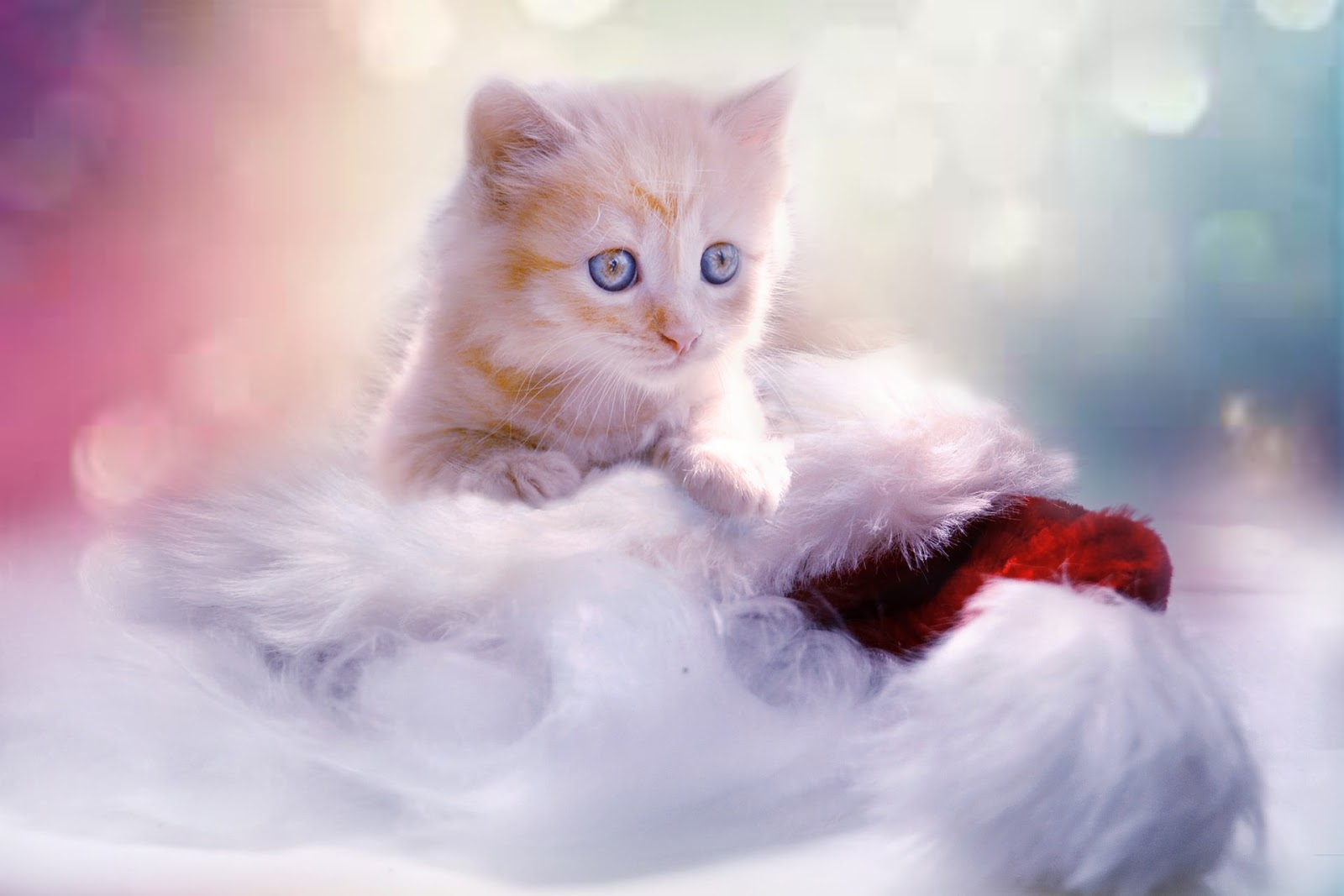 kitten-christmas-desktop -wallpaper