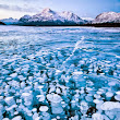 Abraham Lake , Alberta,Canada: Frozen Methane Bubbles