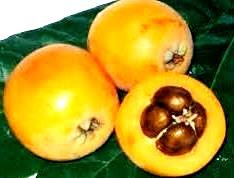Foto de la fruta nispero de color amarillo