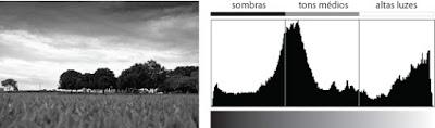 Imagem de Ârvores em Preto e Branco