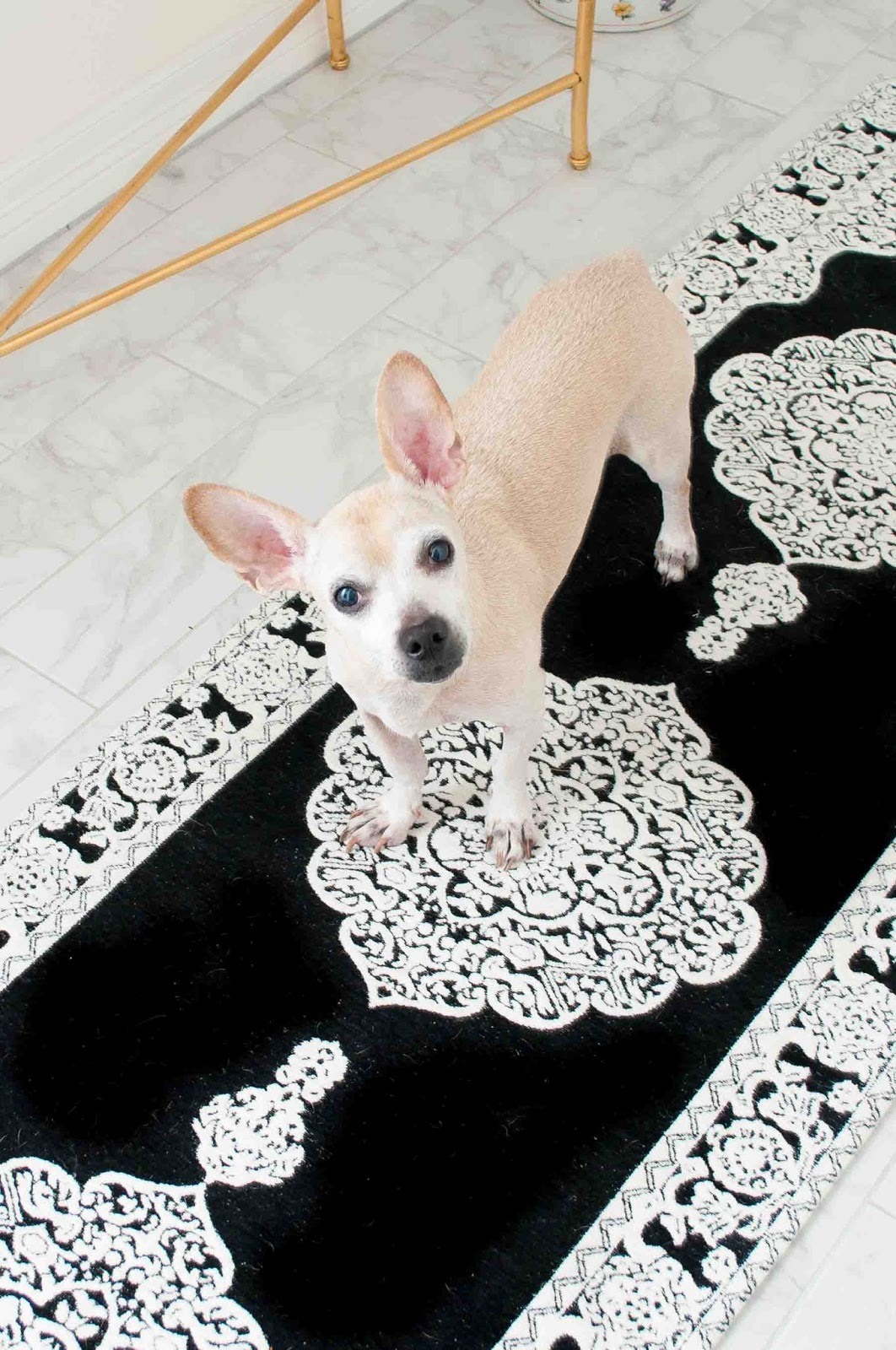 Cute dog on the marbella rug runner by Safavieh.
