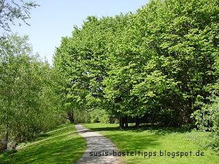 grüne Bäume im Mai, Foto von unabhängiger Stampin' Up! Demonstratorin in Coburg