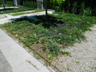 Toronto King West Village front garden clean up before by Paul Jung Gardening Services