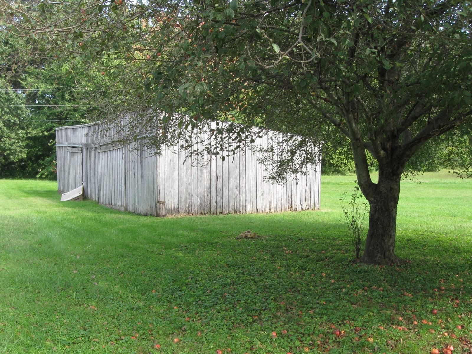 sitting together the apple tree and garage reminded me of how