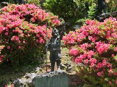 鎌倉のサツキ