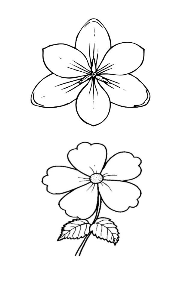 Sketsa Gambar Bunga Kreasi Dunia Anak Cerdas