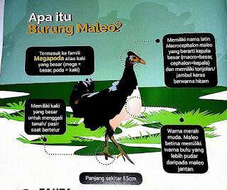 Hewan Endemik Indonesia Asal Sulawesi