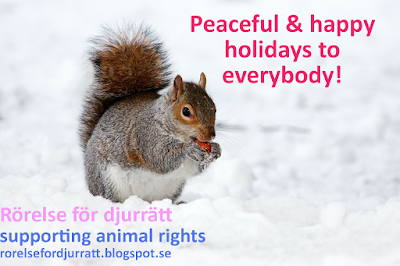 Happy holidays with squirrel - Rörelse för djurrätt