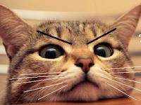PEMBODOHAN..! Mitos Kedokteran Tentang Kucing