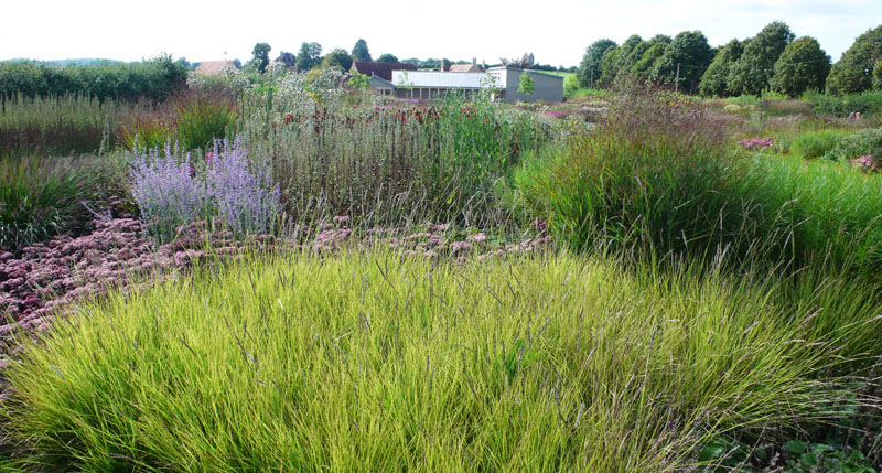 Share my garden bruton for Mass planting grasses