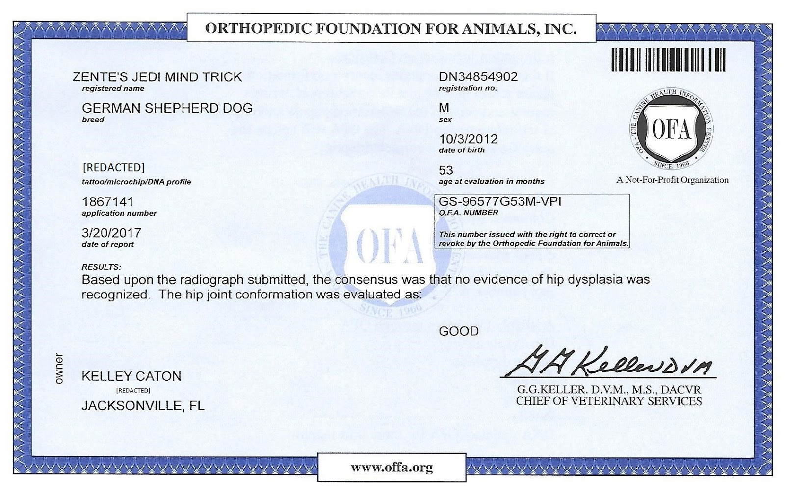 Kelleys dog blog hip report there is no evidence of hip dysplasia heres his certificate ive redacted my address and jedis microchip number because theyre none of the russians xflitez Gallery