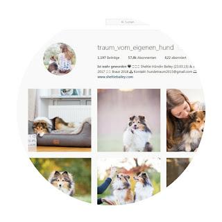 traum vom eigenen hund sheltie instagram