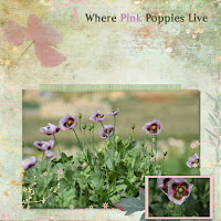 New in store Pink Poppies with freebies