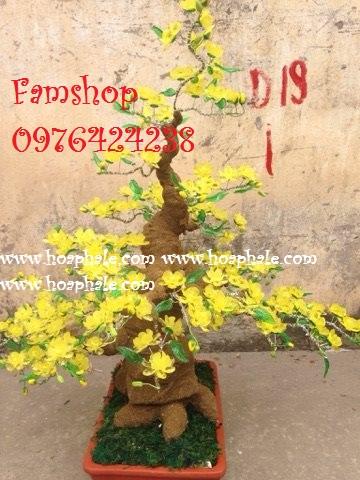 Goc bonsai cay hoa mai tai Nguyen Đinh Hoan