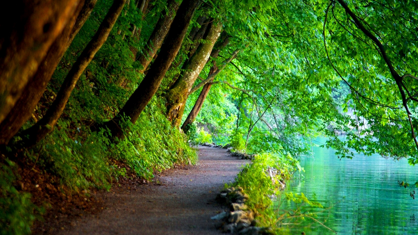 Free Nature Wallpaper   Space And The Wood