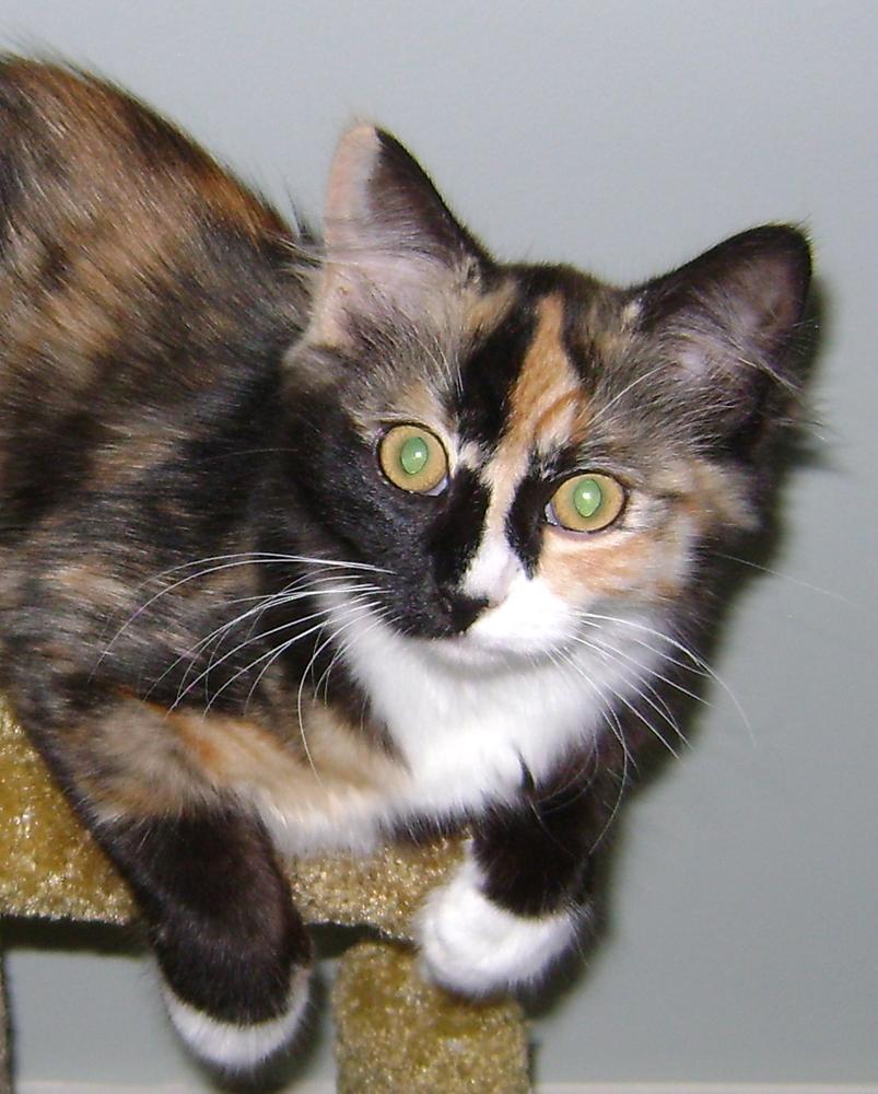 kitten adoption orange county