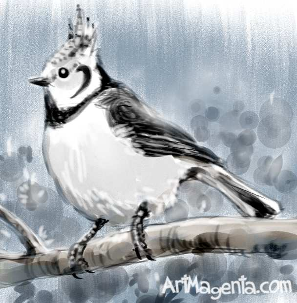 Crested Tit sketch painting. Bird art drawing by illustrator Artmagenta