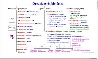 http://cienciasnaturales.es/7M1BTO.swf