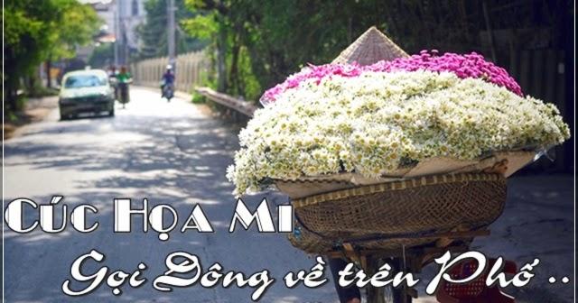 Tản Mạn: Cúc Họa Mi gọi Đông về với phố Hà Nội