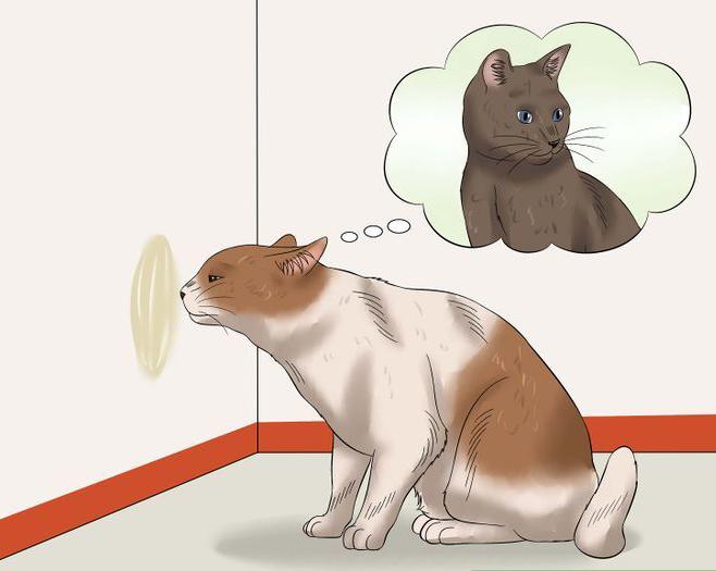 Cat Small indefinite quantity Verge on Me