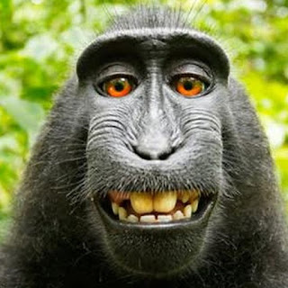 best monkey still alive..chakrus gf