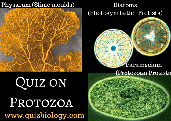 Multiple Choice Quiz on Protozoa