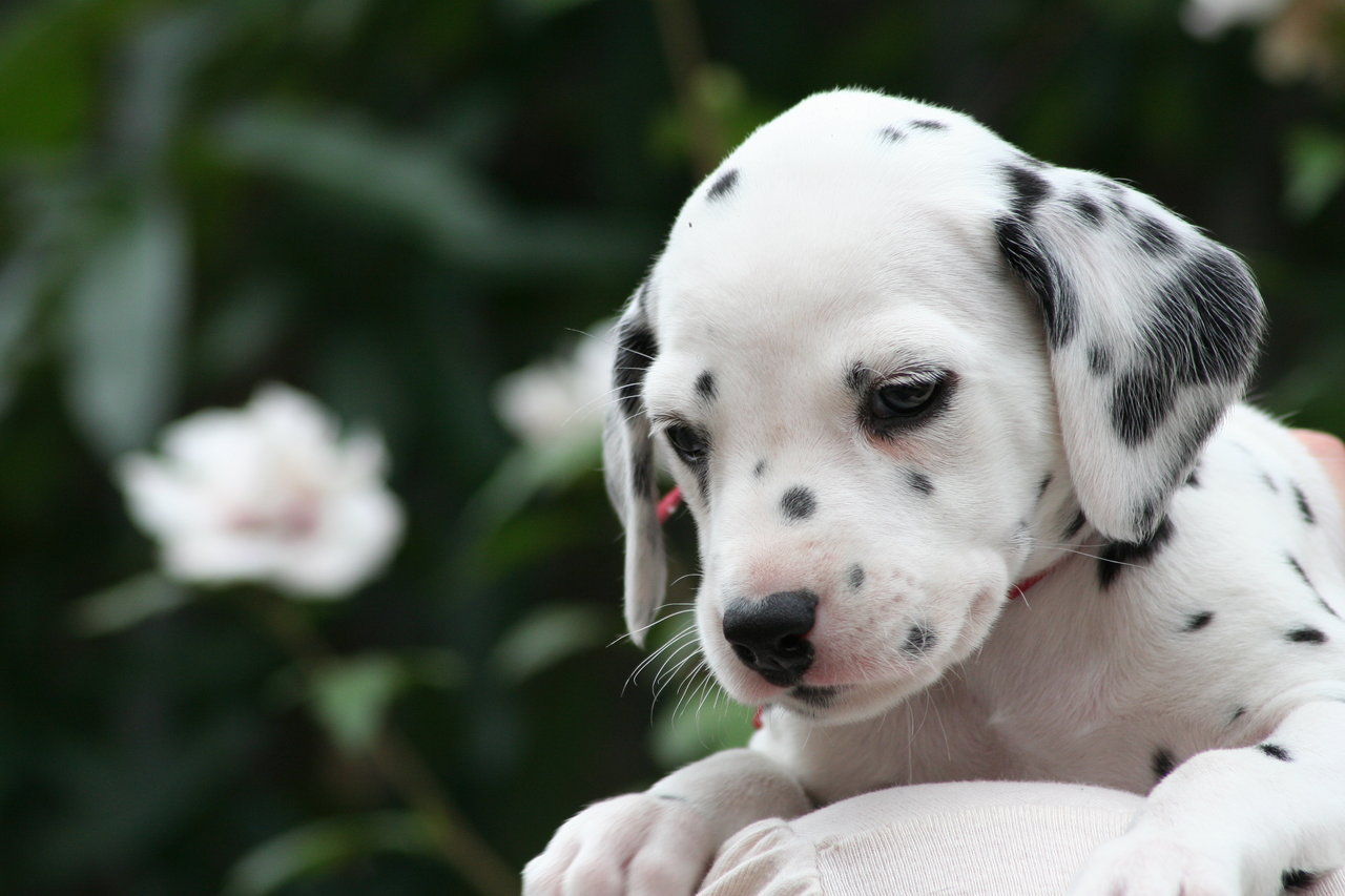 Cute And Funny Pictures Of Animals 53. Puppies 2